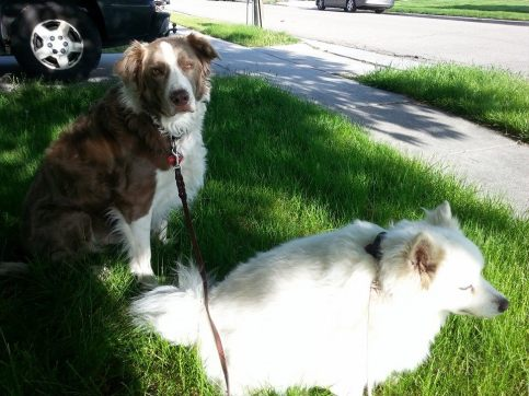 Buster and Sami ready for a morning walk. (Photo by Amy Miller)
